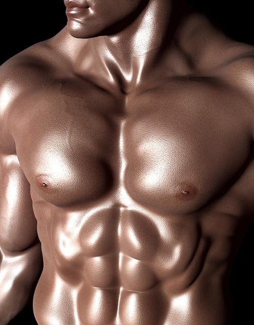 שרירי בטן וחזה קדמי